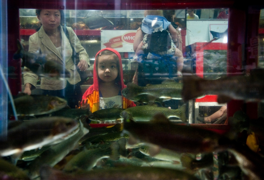 "Sophia Z. Lariviere, 3, and her mother Xiaoying Zhang watch the black trout swim through the new 500-gallon fish tanks, a $30,000 renovation at Wholey's on Saturday, May 31, 2014. Wholey's held a ""Count the Trout"" event asking families to donate one dollar to The Children's Institute of Pittsburgh to guess how many trout were in the tank in hopes to win a gift card to Wholey's. (EMILY HARGER 